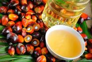 Perchè l'olio di palma fa male?