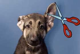 cane orecchie forbici